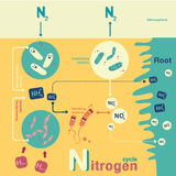 Nitrogen cycle Stock Image