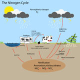The Nitrogen Cycle. Vector illustrator and  computer design Stock Photos
