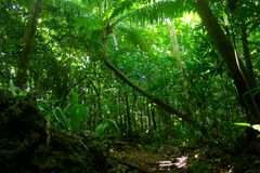 Niue Jungle Royalty Free Stock Photo