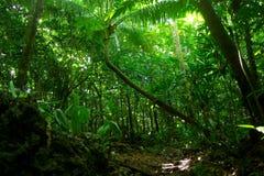 Niue Jungle. Lush greens in the jungle, hiking towards Togo Chasm (Niue Royalty Free Stock Photo
