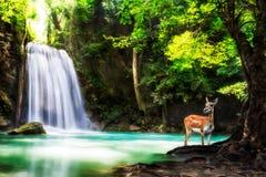 Nivå fem av den Erawan vattenfallet Royaltyfri Bild