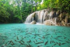 Nivå två av den Erawan vattenfallet i det Kanchanaburi landskapet, Thailand Fotografering för Bildbyråer