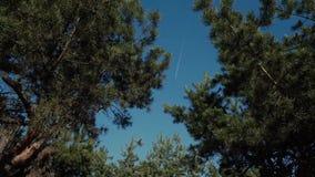 Nivån i himmelbarnet sörjer fri ultrarapid för ljus för den soliga dagen för skogen, träd, himmel stock video