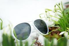 Nivalis de Galanthus entre a neve e os óculos de sol brancos, spr do conceito Imagens de Stock Royalty Free