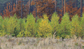 Niveaus van Autumn Colours In Forest Stock Foto's