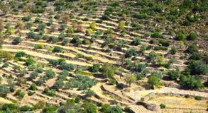 Niveaux de Croplands Image libre de droits