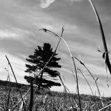 Nivel del suelo Imagen de archivo libre de regalías