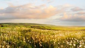 Nivelando a paisagem de campos agrícolas e do dente-de-leão iluminado foto de stock