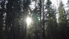 Nivelando rupturas do sol através das árvores na floresta vídeos de arquivo