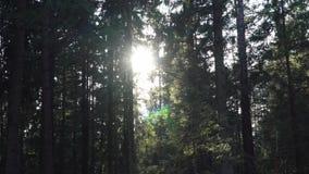 Nivelando rupturas do sol através das árvores na floresta filme