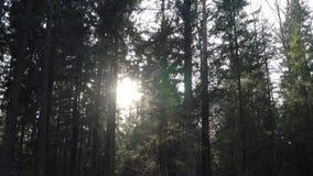 Nivelando rupturas do sol através das árvores no timelapse da floresta filme