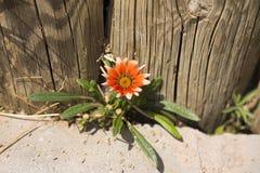 Nivele do close up colorido laranja das flores imagem de stock royalty free