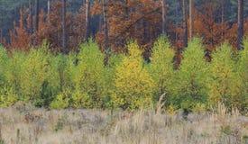 Niveles de Autumn Colours In Forest Fotos de archivo