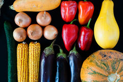 Żniw warzywa Obraz Royalty Free