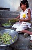 żniwa hummus Fotografia Stock