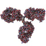 niwecznika g igg immunoglobulin molekuła Obraz Royalty Free
