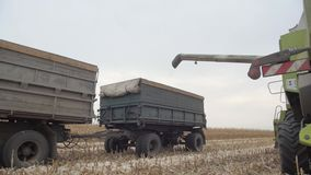 Żniwiarz w śródpolnej zbierackiej kukurudzy zdjęcie wideo