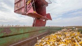 Żniwiarza dolewania kukurudza zbiory