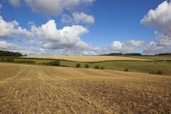Żniwo krajobraz Zdjęcie Royalty Free