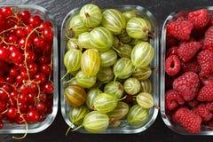 Żniwo lato jagody Obrazy Stock
