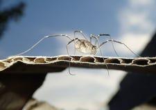 Żniwo mężczyzna pajęczak z niebem obrazy stock