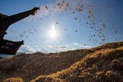 Żniwo na Kukurydzanym polu w Tajlandia zdjęcia royalty free