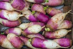 Żniwo organicznie rzepa Fotografia Stock