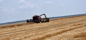 Żniwo zima wheat_5 Zdjęcia Royalty Free