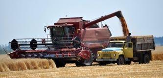 Żniwo zima wheat_4 Fotografia Royalty Free