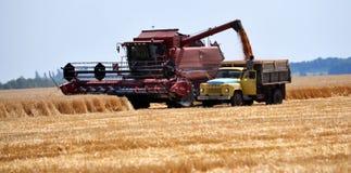 Żniwo zima wheat_3 Fotografia Royalty Free