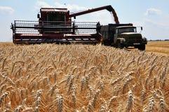 Żniwo zima wheat_7 Fotografia Stock