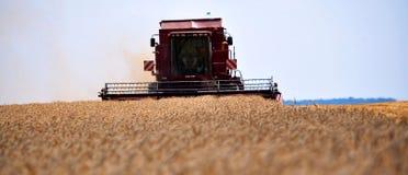 Żniwo zima wheat_6 Zdjęcie Stock