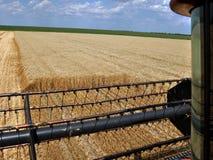 Żniwo zima wheat_8 Fotografia Royalty Free