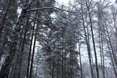 Niza un winterday Imagen de archivo