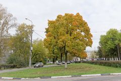 Nizhny Novgorod俄国 - 10月06日 2017年 与五颜六色的叶子的豪华秋天槭树在城市风景 图库摄影