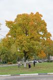 Nizhny Novgorod俄国 - 10月06日 2017年 与五颜六色的叶子的豪华秋天槭树在城市风景 库存照片