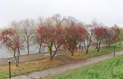 Nizhny Novgorod俄国 - 10月13日 2016年 秋天风景在亚历山大公园 免版税库存图片