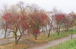 Nizhny Novgorod俄国 - 10月13日 2016年 秋天风景在亚历山大公园 库存照片