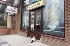 nizhny novgorod Russia - Czerwiec 20 2016 Domowy kot w kołnierzu przychodził zwierzę domowe sklep Larry dla posiłku Przychodził w Obrazy Stock