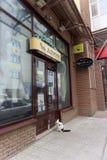 nizhny novgorod Russia - Czerwiec 20 2016 Domowy kot w kołnierzu przychodził zwierzę domowe sklep Larry dla posiłku Przychodził w Zdjęcie Stock