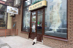 Nizhny Novgorod, Russia. - June 20.2016. Domestic cat in the collar came to the pet store to Larry for a meal. He came and sat in Stock Images