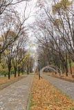 Nizhny Novgorod russia - Oktober 13 2016 Autumn Landscape i Alexander Garden Arkivbilder