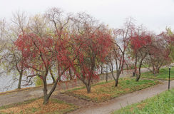 Nizhny Novgorod russia - Oktober 13 2016 Autumn Landscape i Alexander Garden Arkivbild