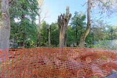 Nizhny Novgorod, Russia. - September 21.2018. Measures of municipal services of the city on cutting and uprooting of old. Poplar trees in the Square of 1905 royalty free stock images