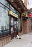 Nizhny Novgorod, Russland - 20. Juni 2016 Hauskatze im Kragen kam zum Haustierspeicher zu Larry für eine Mahlzeit Er kam herein u Stockfoto