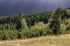 Nizke Tatry - baixo Tatras Fotos de Stock