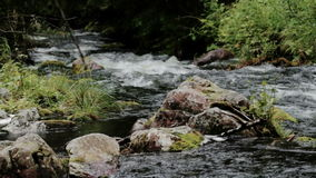 Njupan River Flowing in National Park Fulufjallet Sweden stock footage