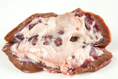 Njure av ett griskött royaltyfri fotografi