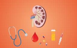 Njurehälsa med medicinhjälpmedel som injektionssprutan för preventivpillerstetoskopblod royaltyfri illustrationer