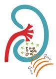Njurestenar stock illustrationer